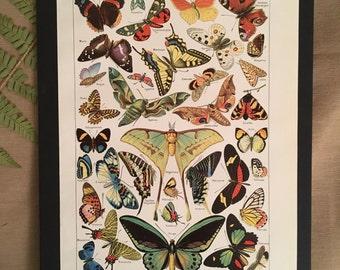 Board naturalist, history & natural sciences - butterflies - Larousse