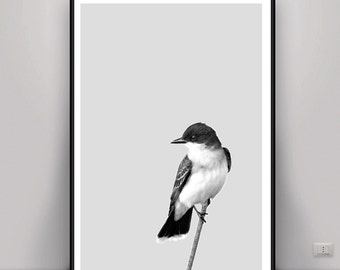 Bird Print, Bird DIGITAL ART, Digital Download, DOWNLOAD pictures, Animal Black and White, Black White Print, Nursery Wall Art, Nature Art