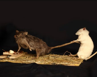 taxidermy rat trap taxidermy rat curiosity odditties
