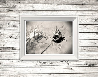 Seed Heads in Monochrome - Gallery Art Print 'Unframed'  - Flower photography BW plant nature floral outside - P&P WORLDWIDE