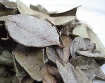 Curry Leaves – Murraya Koenigii