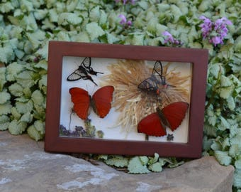 Translucent Skies Real Insect Art