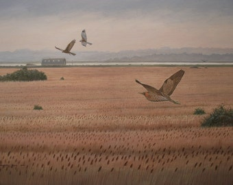 Bittern And Marsh Harriers On Langenhoe Point 2013 A3 Limited Edition Giclee Print Richard Hull Fine Art