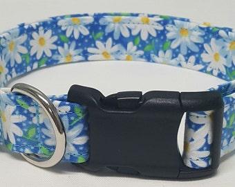 dog collar, blue daisy, daisy, daisies, flowers, daisy dog collar, floral dog collar, female dog collar, female collar