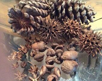 NATURE SEEDS,PODS, Pinecones, Sweet gum pods, crepe Myrtle,Acorn,Craft,Supplies