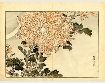 Large Elegant Peach Color Flower Chrysanthemum - 1892 Bairei Kono Original Japanese Kiku Chrysanthemum Woodblock Print