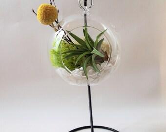 Air plant terrarium kit with yellow ball ; unique gift; tillandsia; air plant;terrarium;desk decor