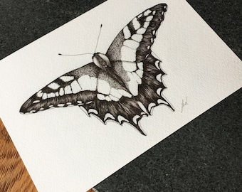 British Swallowtail Butterfly A5 Print- Limited Edition
