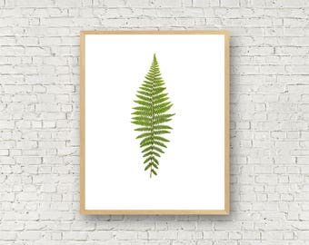 Lady Fern - Pressed Fern Plant Print - Botanical Print from Real Pressed Fern - Fern Art 8X10 11X14 Custom Size Little Green Fern Boho Hippy