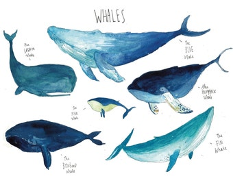 Greetings Card - Whales