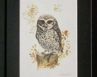 Mounted and framed Owl print, 12''x16'' framed, Little Owl by Joel Kirk