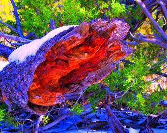 Tree Stump Wall Art, Photography