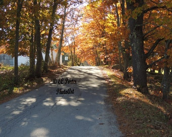 Maine Rural Coastal Road
