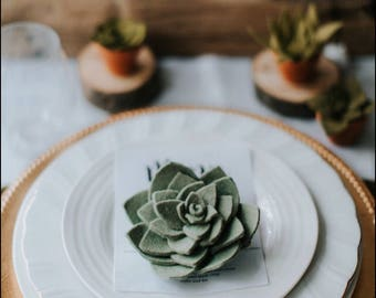 Premium succulent - wedding favour - favor - place card - place holder