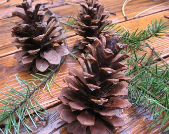 Scented Pinecone, Unscented Pine Cone, Natural Pine Cone, Scented Pine Cone, Fall Home Decor, Rustic Decor, Craft Pine Cones, Craft Supplies