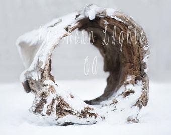 Winter Scene Hollow Log Digital Photography Background