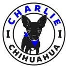 CharlieChihuahua