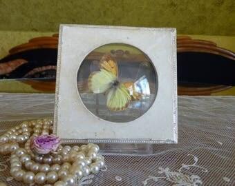 1890 Nérée Boubée Butterflies, Paris
