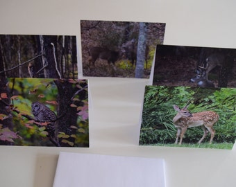 Photo Notecards - The Critter Collection