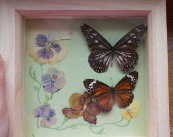 Two Butterflies with Pressed Flowers, Victorian style display