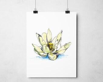 Original Print: American Lotus