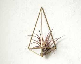 Air plant wall holder Himmeli Polyhedron No01 air plant included  | wall sconce | brass planter | wall deco | air plant container