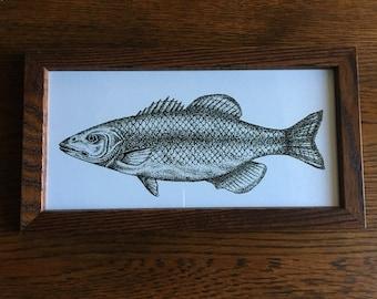 Framed Nautical Fish Print