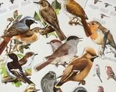 Birds Paper Ephemera Scrap Pack. Vintage Pages paper collage pack for scrapbooking