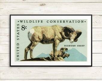 Bighorn sheep, sheep poster, wild sheep art, wild sheep print, bighorn sheep art, wildlife art set, animal print set, nursery art set, sheep