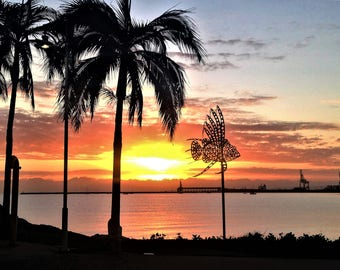 Sunrise Photography with fish, over the horizon in Townsville, Queensland Australia