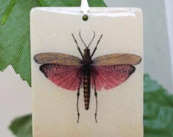 Grasshopper wings etsy for Grasshopper tattoo supply