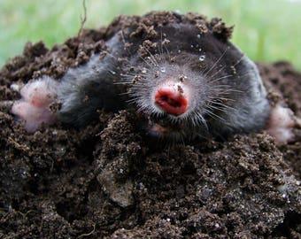 The Mole 7x5