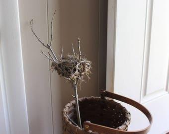 Real Bird Nest, All Natural nest, Bird's Nest, Bird Nest, Decrative Nest, Floral Accent, Finch Nest