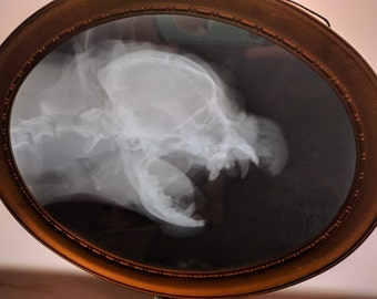 X-ray Yapping Dog