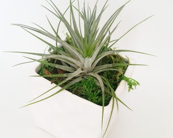 Potted SMARTplant