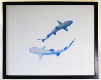 White-tipped reef sharks circling