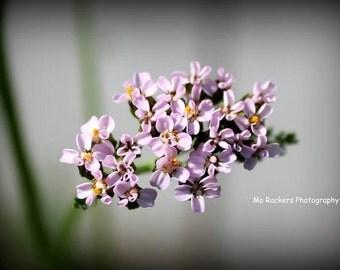 Landscape Photography - Lavender Flowers