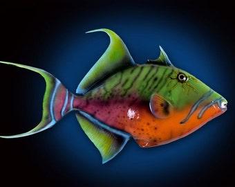 "Queen Trigger Fish Wall Mount 14""x24"""