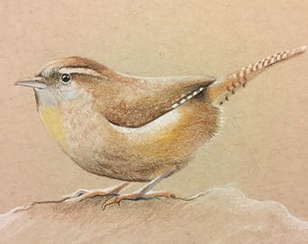 Carolina Wren - colored pencil drawing on tan toned paper.