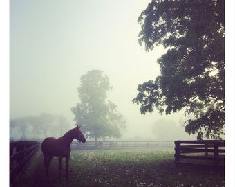 Foggy Morning by the Tree