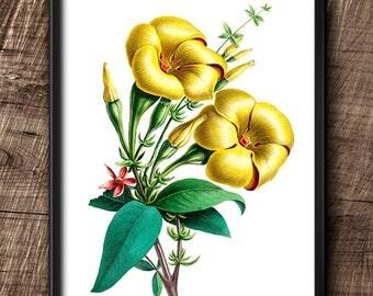 Allamanda · 8x10 · Instant Download · Botanical · Wall · Printable · Digital File #13