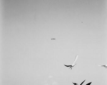 Birds - Fine Art print