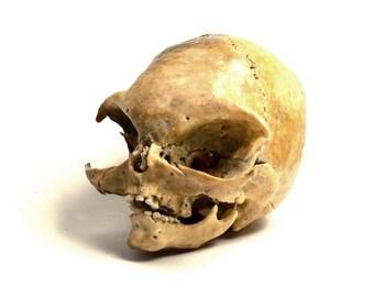 Alien skull N3