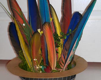 Macaw Feather Arrangement, Scarlett, Hyacinth, Green Wing, Blue and Gold