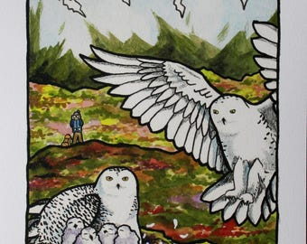 Snowy owls on the tundra