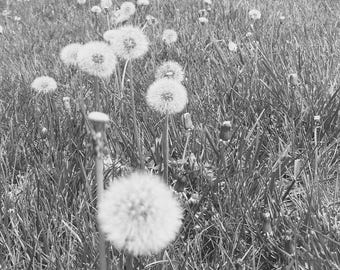 The Wishing Field - B&W Photograph, Nature
