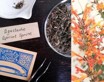 AGASTACHE APRICOT SPRITE (20 seeds) Agastache aurantiaca -Tea and Decoration-
