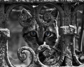 CONSTANTA Blue Eye CAT - A3 (11.75x16.5 inch) art photography high quality poster signed and certified by DeCay - only 500 ever printed
