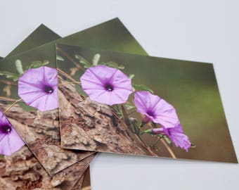 Pack of five (5) Purple Cairica Ipomoea flower A6 postcards (glossy)