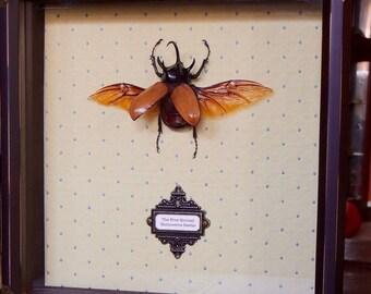 Five-Horned Rhinoceros Beetle - Framed Victorian Steampunk Beetle